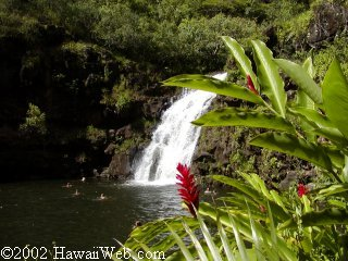 Waimea Falls Park - Beaches, Attractions/Entertainment - 61228 Kamehameha Hwy, Honolulu, HI, 96712, US