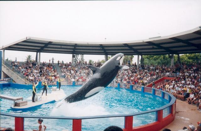 Miami Seaquarium - Attractions/Entertainment, Ceremony Sites - 4400 Rickenbacker Causeway, Key Biscayne, fl