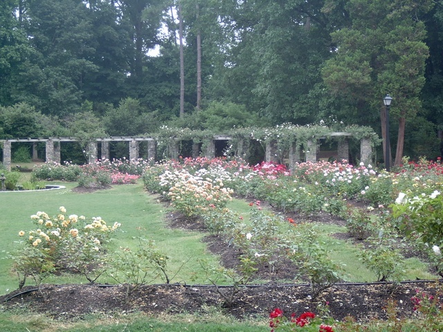 Raleigh Municipal Rose Garden - Ceremony Sites, Parks/Recreation, Attractions/Entertainment - 301 Pogue Street, Raleigh, NC, United States