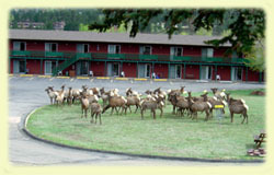 Discovery Lodge - Hotels/Accommodations - 800 Big Thompson Ave, Estes Park, CO, 80517, US