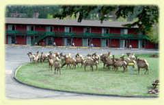Discovery Lodge - Hotel - 800 Big Thompson Ave, Estes Park, CO, 80517, US