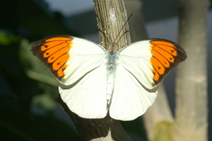 The Butterfly House - Attractions/Entertainment, Ceremony Sites, Parks/Recreation - 15193 Olive Blvd, Chesterfield, MO, 63017