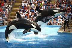 Sea World - Attraction - Sea World, San Diego, CA, US