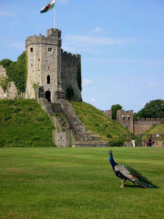 Attractions/Entertainment | Pentyrch, Cardiff, UK | Wedding Mapper
