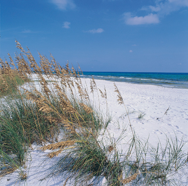 Grayton Beach State Park - Attractions/Entertainment, Parks/Recreation - 70 Hotz Ave, Santa Rosa Beach, FL, United States