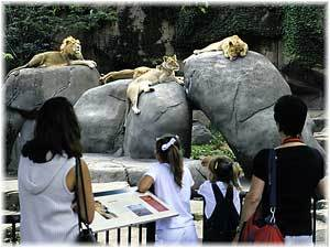 Lincoln Park Zoo - Attractions/Entertainment, Restaurants, Parks/Recreation - 2200 N Cannon Dr, Chicago, IL, United States