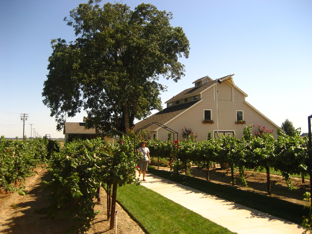 Scribner Bend Vineyards - Ceremony Sites, Reception Sites - 9051 River Rd, Sacramento, CA, USA