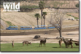 San Diego Wild Animal Park - Attractions/Entertainment, Ceremony Sites, Parks/Recreation - 15500 San Pasqual Valley Rd, Escondido, CA, USA