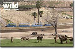 San Diego Wild Animal Park - Attraction - 15500 San Pasqual Valley Rd, Escondido, CA, USA