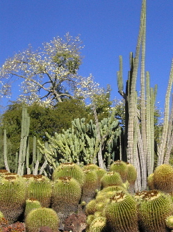 Huntington Library & Botanical Gardens - Attractions/Entertainment, Golf Courses, Parks/Recreation - 1151 Oxford Rd, San Marino, CA, 91108, US