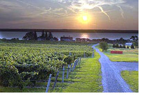 Fox Run Vineyards - Restaurant - 670 Route 14, Penn Yan, NY, United States