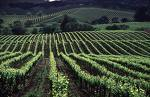 Wine Country Tour - Wineries - 545 Post St, San Francisco, CA, 94102, US