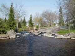 Stewart Park - Attraction -