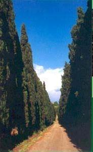 Tenuta Di Pietra Porzia - Honeymoon - Via Di Pietraporzia 60, Frascati, Lazio, 00044, ITALY