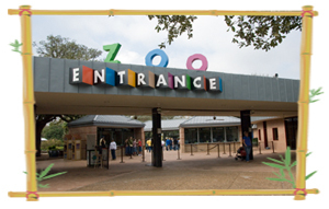 Houston Zoo - Attractions/Entertainment - Houston Zoo, 1513 N MacGregor Dr, Houston, TX