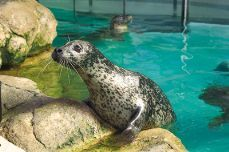 Norwalk Aquarium - Attraction - 650 West Ave # 2, Norwalk, CT, United States