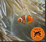 Reception- North Carolina Aquarium - Attraction - 900 Loggerhead Rd, Kure Beach, NC, 28449