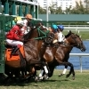 Gulfstream Park Racing - Attractions - 901 S Federal Hwy, Hallandale Beach, FL, United States