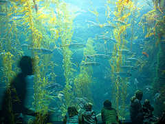 Birch Aquarium At Scripps Institute - Attraction - 2300 Expedition Way, La Jolla, CA, United States