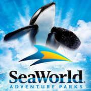Sea World - Attractions - Sea World, San Diego, CA, US