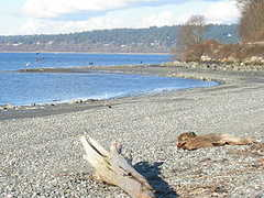 Golden Gardens Park - Park - Seaview Pl NW, Seattle, WA, United States