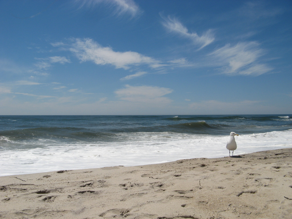 Best Public Beaches In The Hamptons Ny