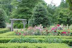 Independence Park Rose Garden - Attraction - 300 Hawthorne Ln, Charlotte, NC, 28204