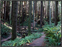 Redwood ParkArcata Community Forest - Outside Fun - East 13th Street, Arcata, California, United States