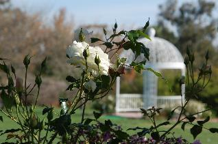 South Coast Botanic Garden - Ceremony Sites, Reception Sites - 26300 Crenshaw Blvd, Palos Verdes Peninsula, CA, 90274, US