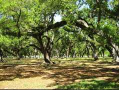 City Park - Attractions - City Park, New Orleans, LA, New Orleans, LA, US