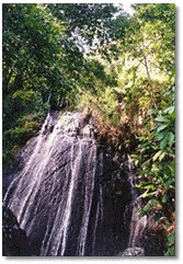 Rain Forest! - Attractions/Entertainment - El Yunque, US
