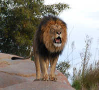 San Diego Wild Animal Park - Attraction - San Diego Wild Animal Park, US