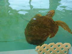 Sea Turtle rescue centre - Attraction - 214 Stable Road, Jekyll Island, GA, United States