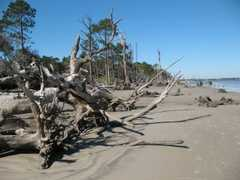 Driftwood Beach - Scenic area -