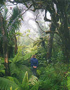 El Yunque Rainforest - Attraction -