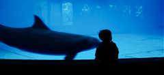 National Aquarium in Baltimore - Ceremony & Reception - 501 E Pratt St, Baltimore, MD, United States