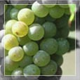 Long Island Wineries - Attraction - 1074 Main Rd, Riverhead, NY, 11901