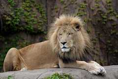 Lincoln Park Zoo - Attraction - 2200 N Cannon Dr, Chicago, IL, United States