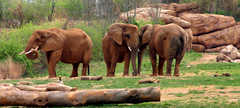 Nashville Zoo At Grassmere - Attraction - 3777 Nolensville Pike, Nashville, TN, United States