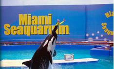 Miami Seaquarium - Attraction - 4400 Rickenbacker Causeway, Key Biscayne, fl