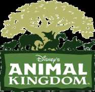 Animal Kingdom - Attraction -