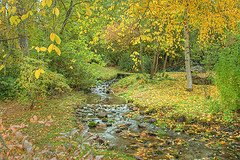 Finch Arboretum - Attraction -