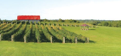 Talon Winery - Reception Sites, Ceremony Sites, Attractions/Entertainment - 7086 Tates Creek Road, Lexington, KY, 40515, United States