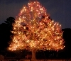 Norfolk Botanical Garden - Garden Of Lights - Attractions/Entertainment - 6700 Azalea Garden Rd, Norfolk, VA, 23518