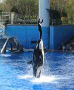 SeaWorld Orlando - Attraction - 7007 Sea Harbor Dr, Orlando, FL, USA