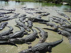 Wooten's Everglades Airboat Tours: Gator Farm - Attraction - 32330 Tamiami Trl E, Ochopee, FL, United States