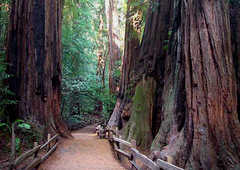 Muir Woods National Monument - Attraction - 1 Muir Woods Road, Mill Valley, CA, United States