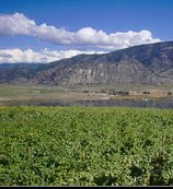 Jackson Triggs Okanagan Estates - Winery - 38691 97th St, Oliver, BC, Canada
