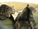 Moonridge Animal Park - Activity - 43285 Goldmine Dr, Big Bear Lake, CA, 92314