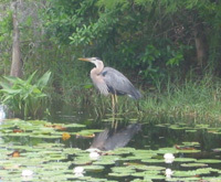 Grassy Waters Nature Preserve - Parks/Recreation - 8264 Northlake Blvd, West Palm Beach, FL, 33412